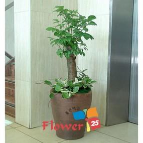 행복나무(Junior)